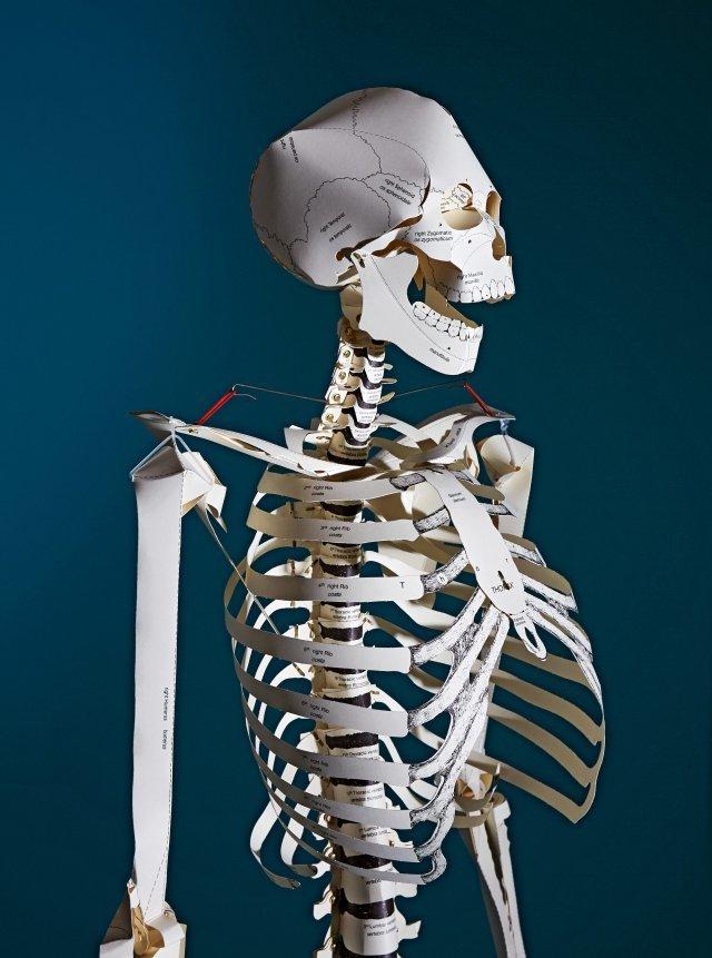 skeleton va image003 44638